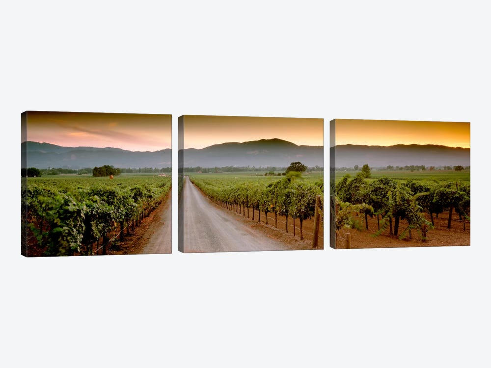 Vineyard Road, Napa Valley, California, USA by Panoramic Images 3-piece Art Print