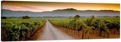 Vineyard Road, Napa Valley, California, USA Canvas Art Print