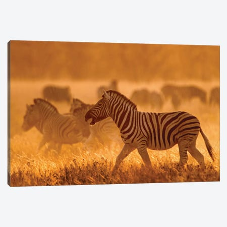Burchell's Zebra I, Etosha National Park, Namibia Canvas Print #PIM13663} by Panoramic Images Canvas Artwork