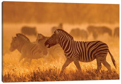 Burchell's Zebra I, Etosha National Park, Namibia Canvas Art Print