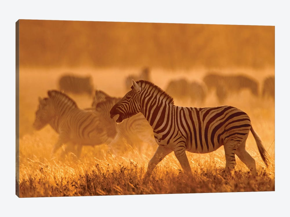 Burchell's Zebra I, Etosha National Park, Namibia by Panoramic Images 1-piece Canvas Print
