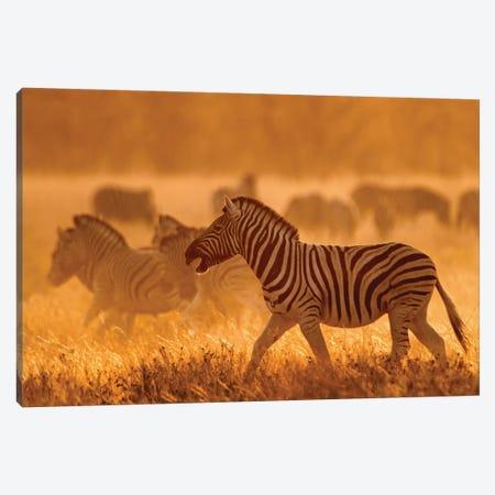 Burchell's Zebra I, Etosha National Park, Namibia Canvas Print #PIM13663} by Panoramic Images Canvas Artwork