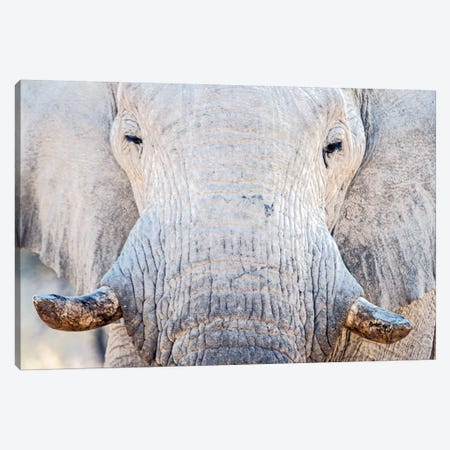 African Elephant I, Etosha National Park, Namibia Canvas Print #PIM13671} by Panoramic Images Canvas Print