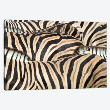 Burchell's Zebra Herd Close-Up II, Etosha National Park, Namibia Canvas Print #PIM13679} by Panoramic Images Canvas Art Print