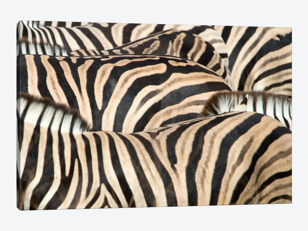 Burchell's Zebra Herd Close-Up II, Etosha National Park, Namibia by Panoramic Images 1-piece Canvas Artwork