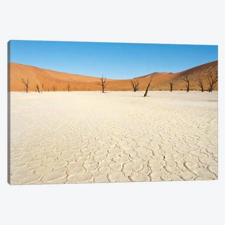 Desert Landscape III, Deadvlei, Namib Desert, Namib-Naukluft National Park, Namibia Canvas Print #PIM13681} by Panoramic Images Canvas Wall Art