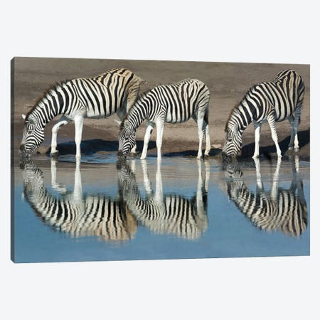 Burchell's Zebras At A Watering Hole II, Etosha National Park, Namibia Canvas Print #PIM13729} by Panoramic Images Canvas Art Print