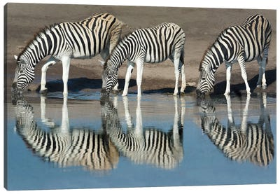 Burchell's Zebras At A Watering Hole II, Etosha National Park, Namibia Canvas Art Print