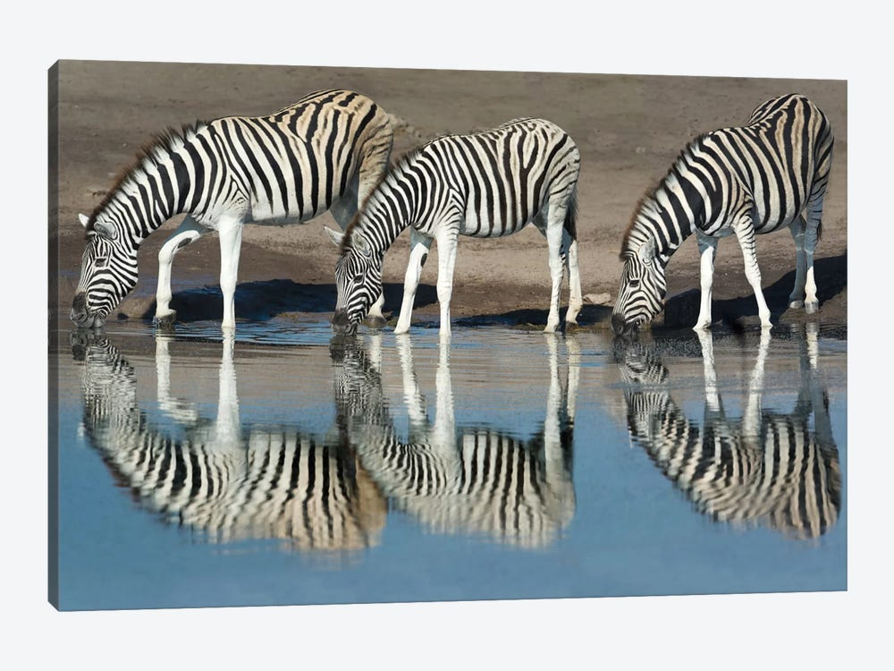 Burchell's Zebras At A Watering Hole II, Etosha National Park, Namibia by Panoramic Images 1-piece Canvas Artwork