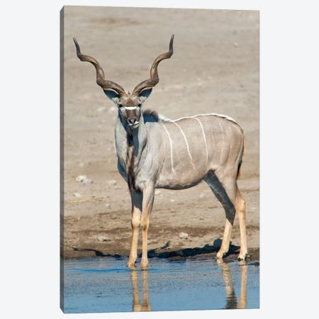 Greater Kudu At A Watering Hole, Etosha National Park, Namibia Canvas Print #PIM13731} by Panoramic Images Canvas Artwork