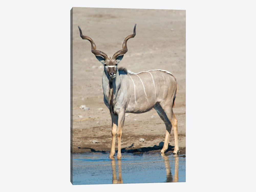 Greater Kudu At A Watering Hole, Etosha National Park, Namibia by Panoramic Images 1-piece Canvas Art Print