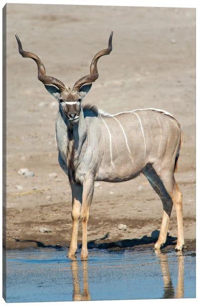 Greater Kudu At A Watering Hole, Etosha National Park, Namibia Canvas Art Print