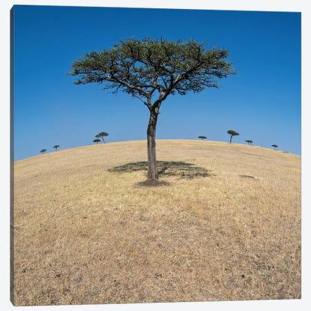 Plains Landscape II, Ndutu, Ngorongoro Conservation Area, Crater Highlands, Arusha Region, Tanzania Canvas Print #PIM13809} by Panoramic Images Canvas Art