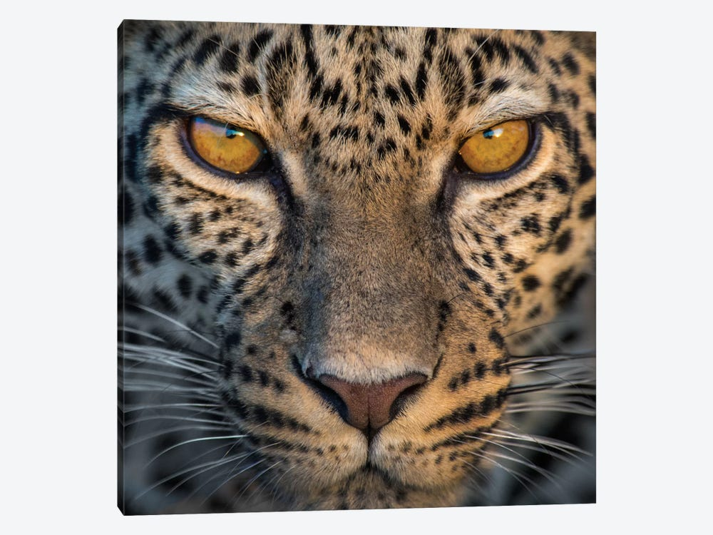 Leopard VII, Ndutu, Ngorongoro Conservation Area, Crater Highlands, Arusha Region, Tanzania by Panoramic Images 1-piece Canvas Art