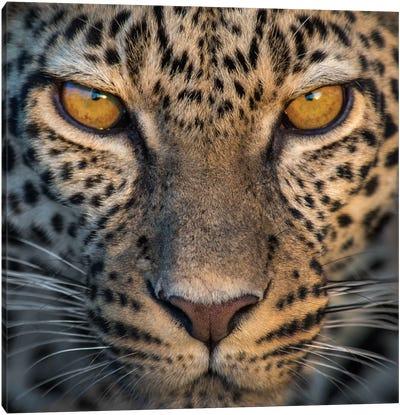 Leopard VII, Ndutu, Ngorongoro Conservation Area, Crater Highlands, Arusha Region, Tanzania Canvas Art Print