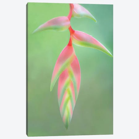Heliconia Flower, Sarapiqui, Heredia Province, Costa Rica 3-Piece Canvas #PIM13918} by Panoramic Images Canvas Art