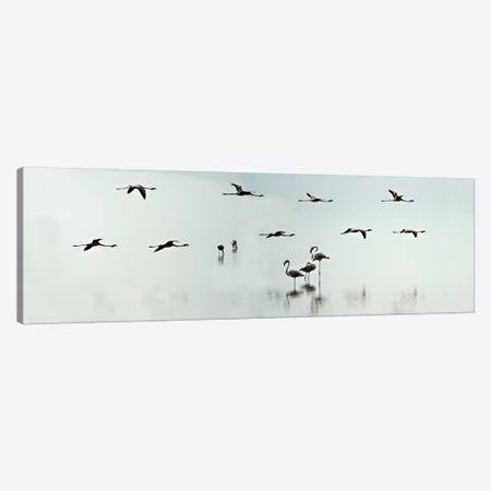 Flamingos, Lake Manyara, Lake Manyara National Park, Tanzania Canvas Print #PIM13930} by Panoramic Images Canvas Artwork