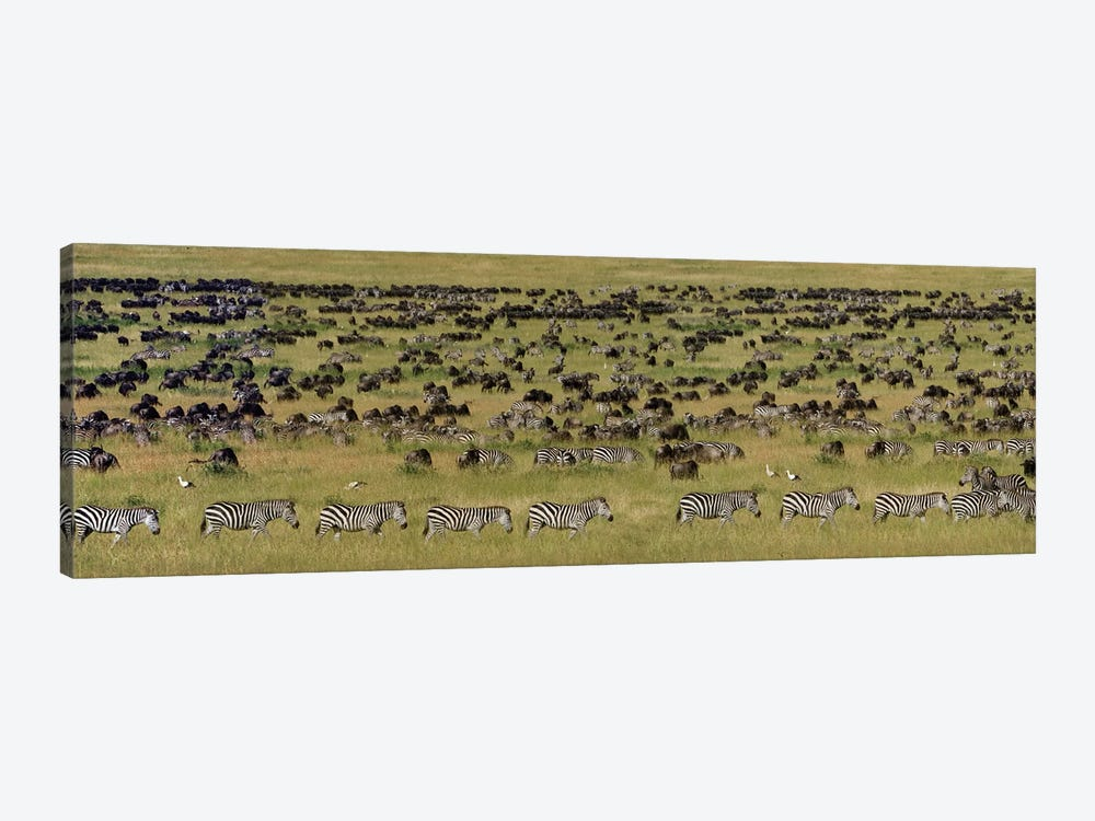 The Great Migration I, Serengeti National Park, Tanzania by Panoramic Images 1-piece Canvas Art