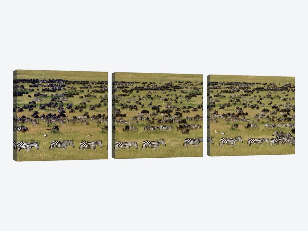 The Great Migration I, Serengeti National Park, Tanzania by Panoramic Images 3-piece Canvas Wall Art