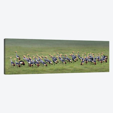 Crowned Cranes, Ngorongoro Conservation Area, Crater Highlands, Arusha Region, Tanzania Canvas Print #PIM13935} by Panoramic Images Canvas Print
