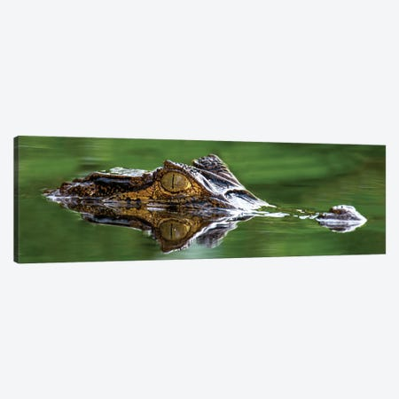 Spectacled Caiman, Costa Rica Canvas Print #PIM13937} by Panoramic Images Art Print