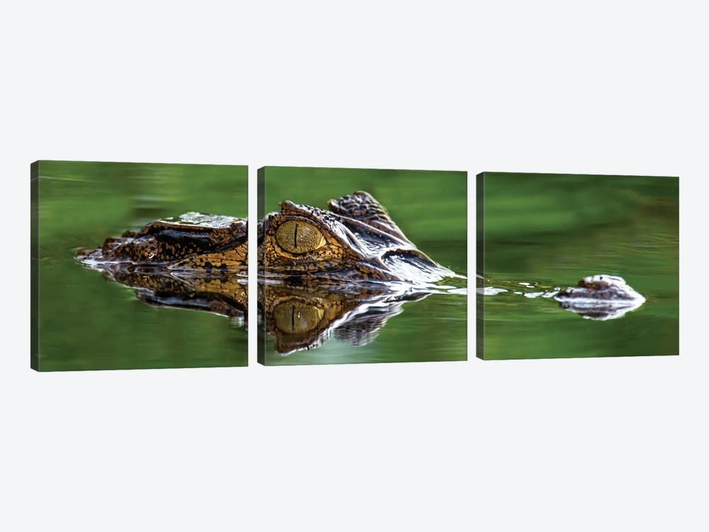 Spectacled Caiman, Costa Rica by Panoramic Images 3-piece Canvas Art