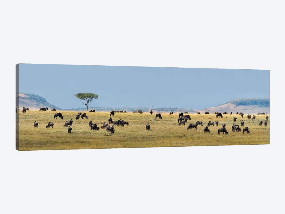 The Great Migration II, Serengeti National Park, Tanzania by Panoramic Images 1-piece Canvas Art