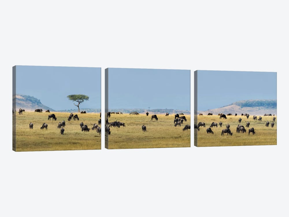 The Great Migration II, Serengeti National Park, Tanzania by Panoramic Images 3-piece Canvas Artwork