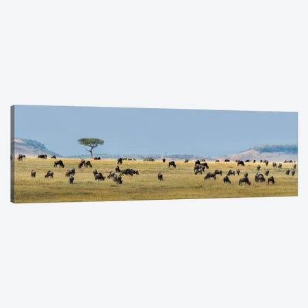 The Great Migration II, Serengeti National Park, Tanzania 3-Piece Canvas #PIM13939} by Panoramic Images Canvas Wall Art
