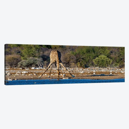 Giraffe At A Watering Hole II, Etosha National Park, Namibia Canvas Print #PIM13940} by Panoramic Images Canvas Art Print