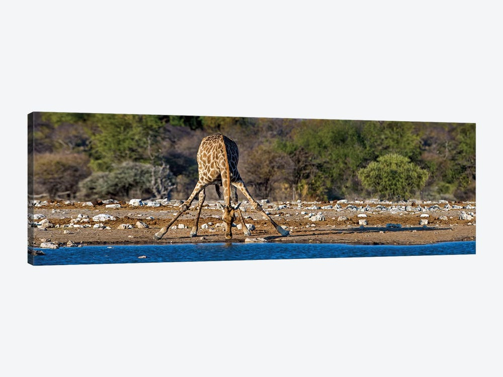 Giraffe At A Watering Hole II, Etosha National Park, Namibia by Panoramic Images 1-piece Canvas Art