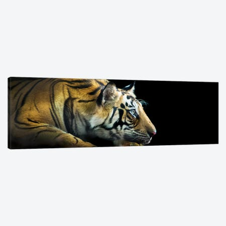 Bengal Tiger, India Canvas Print #PIM13941} by Panoramic Images Canvas Art Print