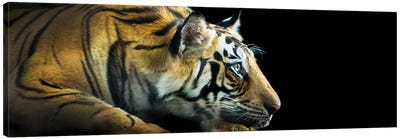 Bengal Tiger, India Canvas Art Print