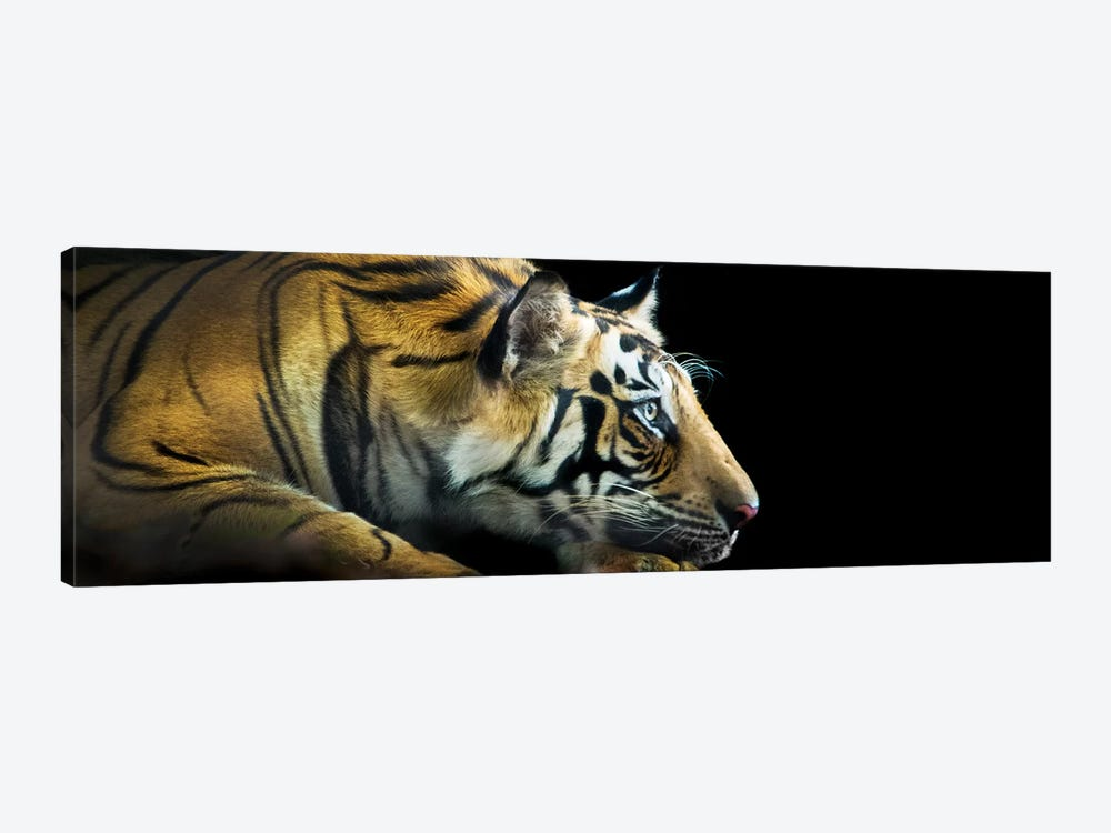 Bengal Tiger, India by Panoramic Images 1-piece Canvas Print