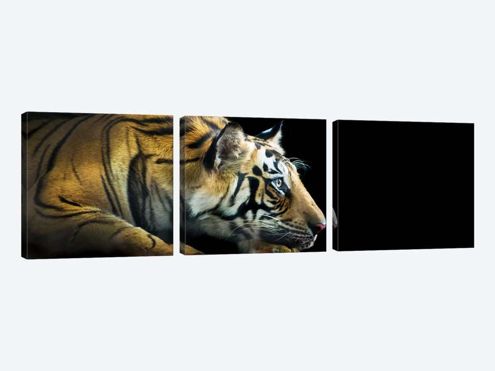 Bengal Tiger, India by Panoramic Images 3-piece Art Print