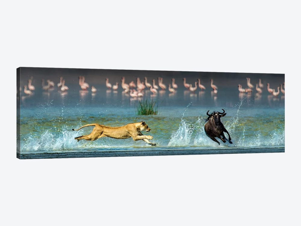 Preying African Lioness II, Ngorongoro Conservation Area, Crater Highlands, Arusha Region, Tanzania by Panoramic Images 1-piece Art Print