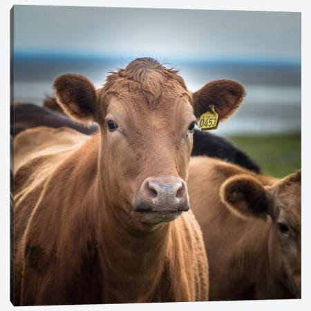 You Talking To Me? Canvas Print #PIM13999} by Panoramic Images Canvas Wall Art