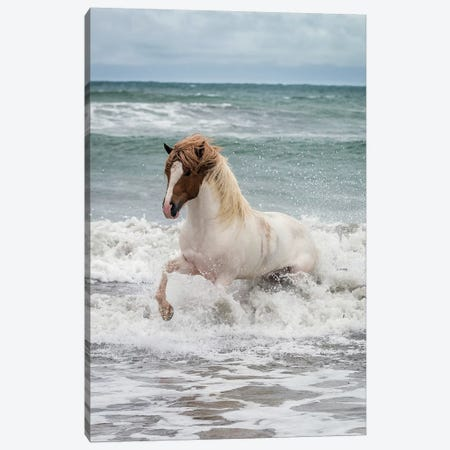 Icelandic Horse In The Sea, Longufjorur Beach, Snaefellsnes Peninsula, Vesturland, Iceland Canvas Print #PIM14000} by Panoramic Images Canvas Print