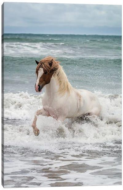 Icelandic Horse In The Sea, Longufjorur Beach, Snaefellsnes Peninsula, Vesturland, Iceland Canvas Print #PIM14000