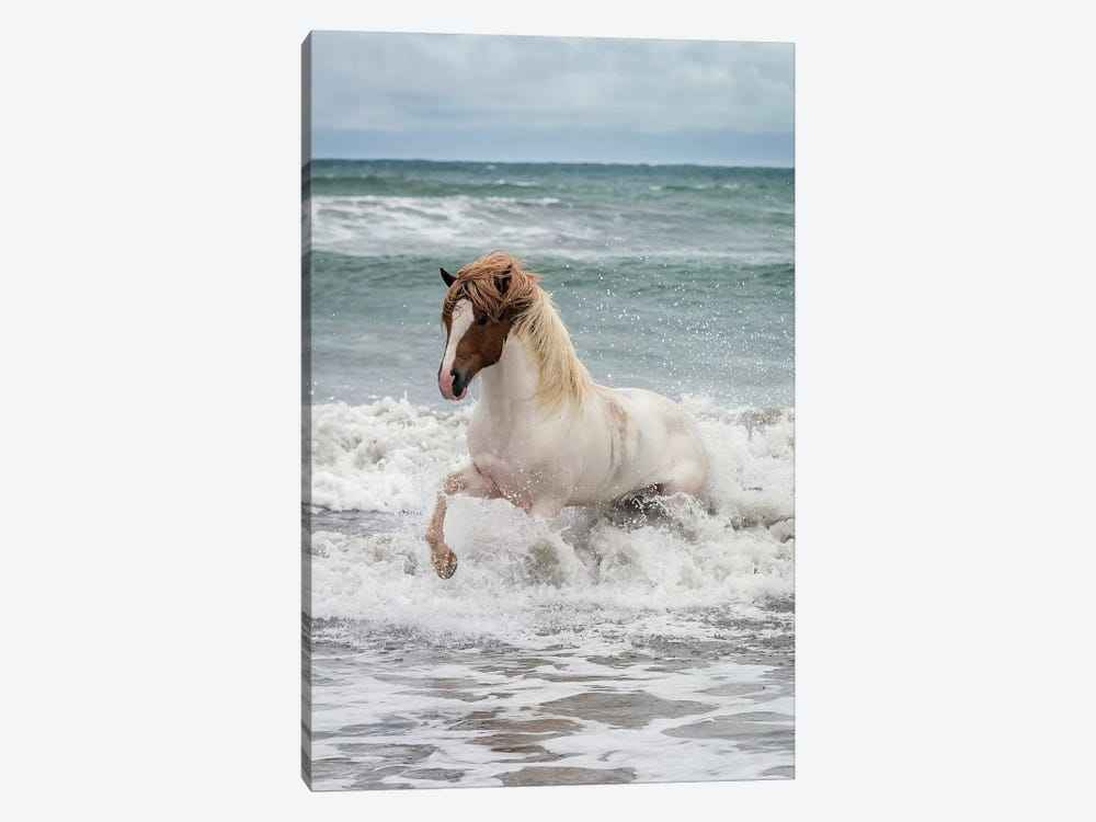 Icelandic Horse In The Sea, Longufjorur Beach, Snaefellsnes Peninsula, Vesturland, Iceland by Panoramic Images 1-piece Canvas Art