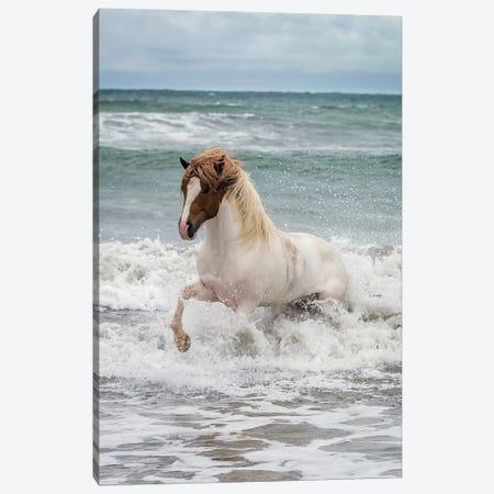 Icelandic Horse In The Sea, Longufjorur Beach, Snaefellsnes Peninsula, Vesturland, Iceland Canvas Print #PIM14000} by Panoramic Images Canvas Print