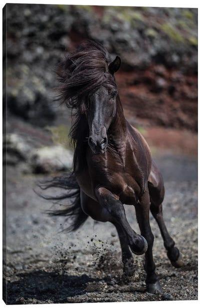 Icelandic Black Stallion II Canvas Print #PIM14006