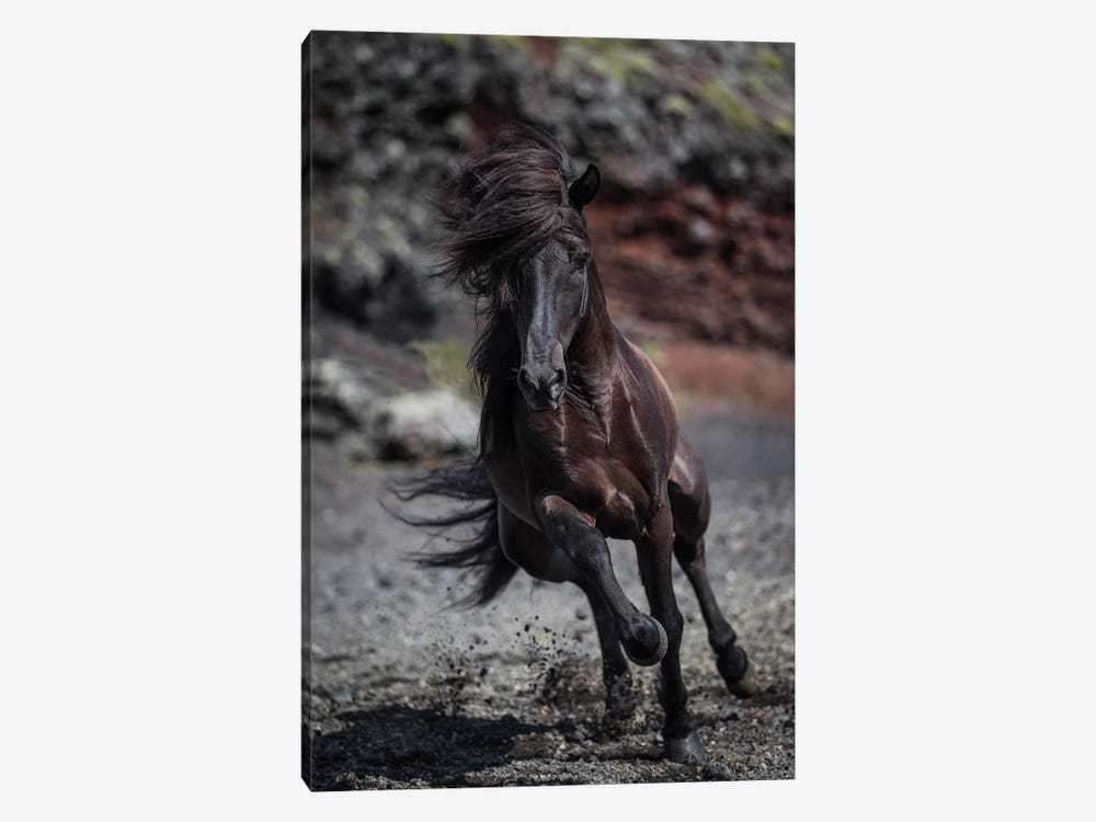 Icelandic Black Stallion II by Panoramic Images 1-piece Canvas Artwork