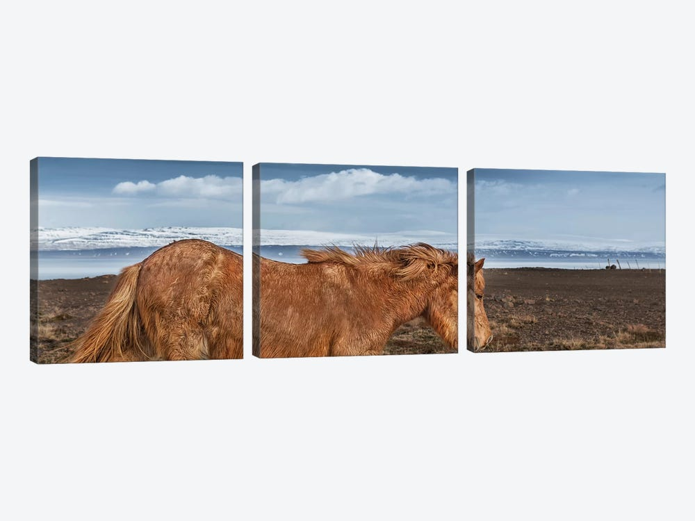 Icelandic Horse II by Panoramic Images 3-piece Canvas Art