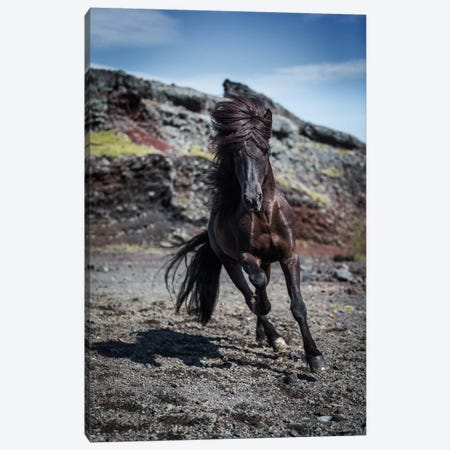 Icelandic Black Stallion III Canvas Print #PIM14018} by Panoramic Images Canvas Art