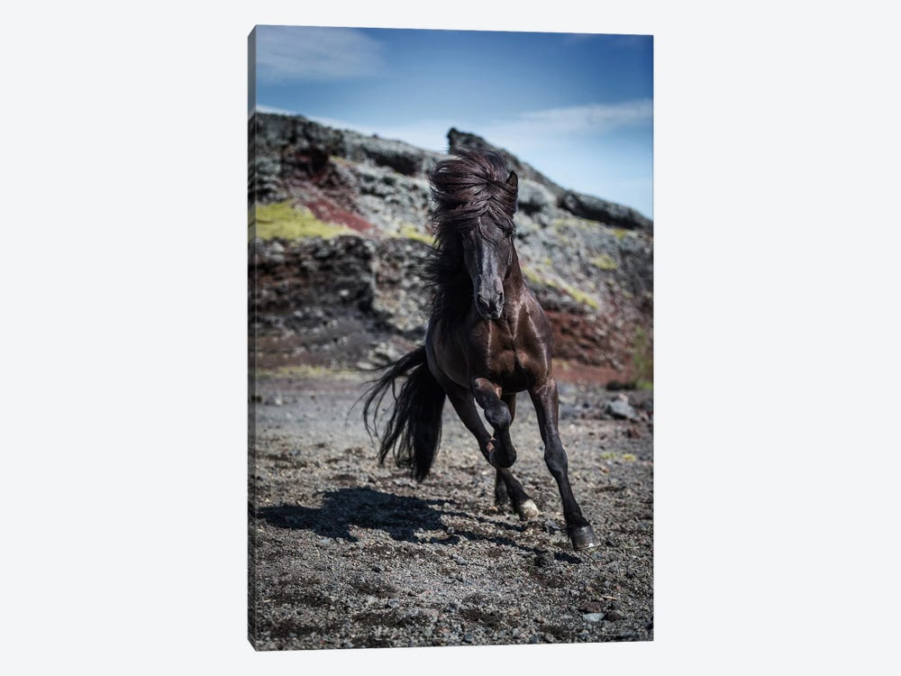 Icelandic Black Stallion III by Panoramic Images 1-piece Canvas Art Print