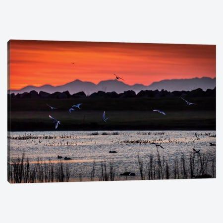 Lowland Landscape, Seltjarnarnesbaer, Hofudborgarsvaedi, Iceland Canvas Print #PIM14034} by Panoramic Images Canvas Art Print