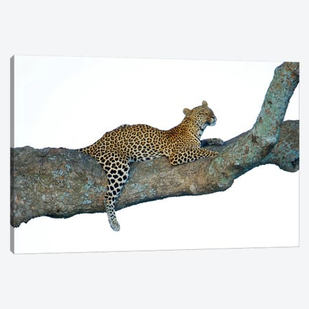 Leopard, Serengeti National Park, Tanzania Canvas Print #PIM14038} by Panoramic Images Canvas Wall Art