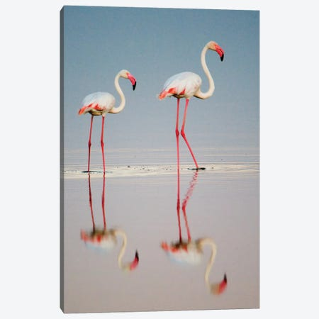 Greater Flamingos I, Ngorongoro Conservation Area, Crater Highlands, Arusha Region, Tanzania Canvas Print #PIM14040} by Panoramic Images Art Print