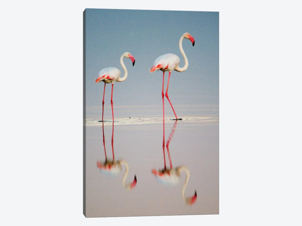 Greater Flamingos I, Ngorongoro Conservation Area, Crater Highlands, Arusha Region, Tanzania by Panoramic Images 1-piece Canvas Art